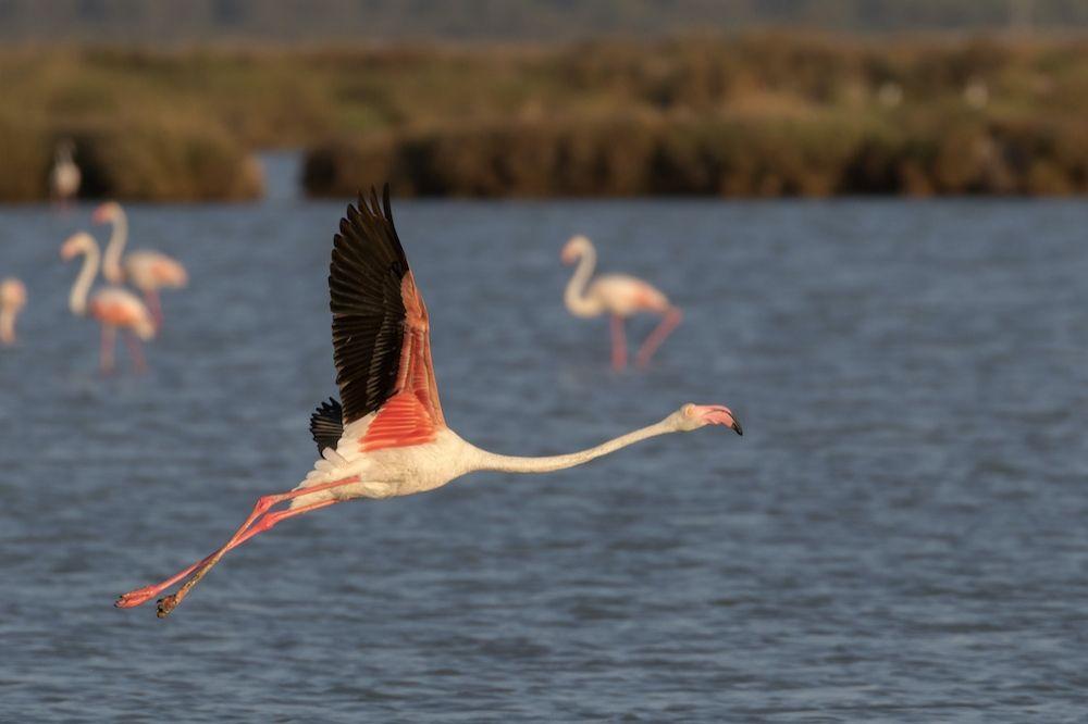 Visita al parque de Doñana